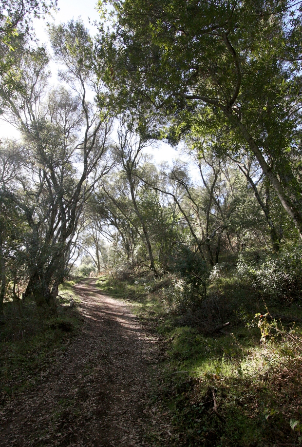 volvon blue oak loop29