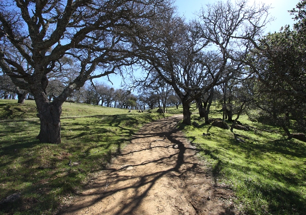 volvon blue oak loop37