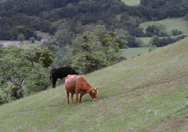 sunol backpack trail13