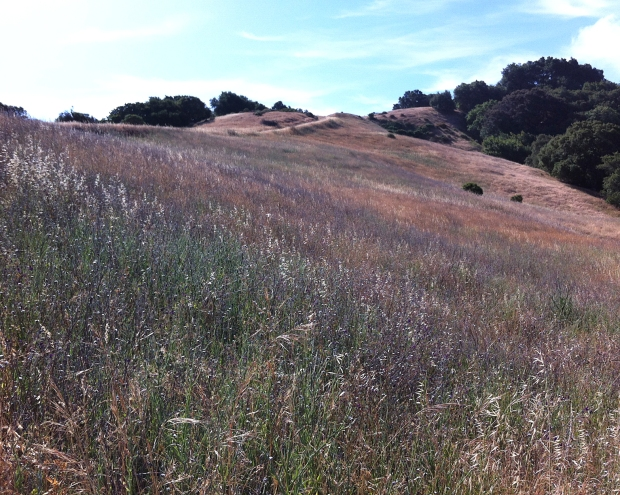 las trampas east side loop18