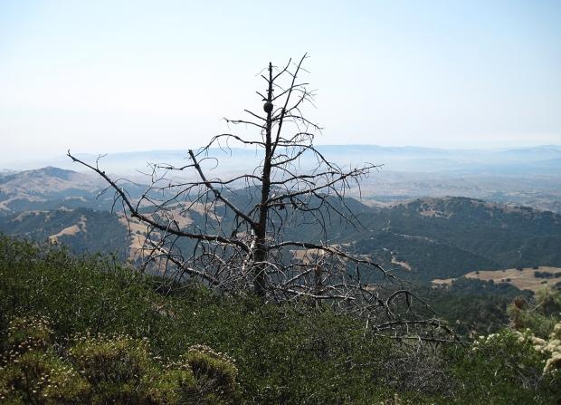 macedo ranch to summit3
