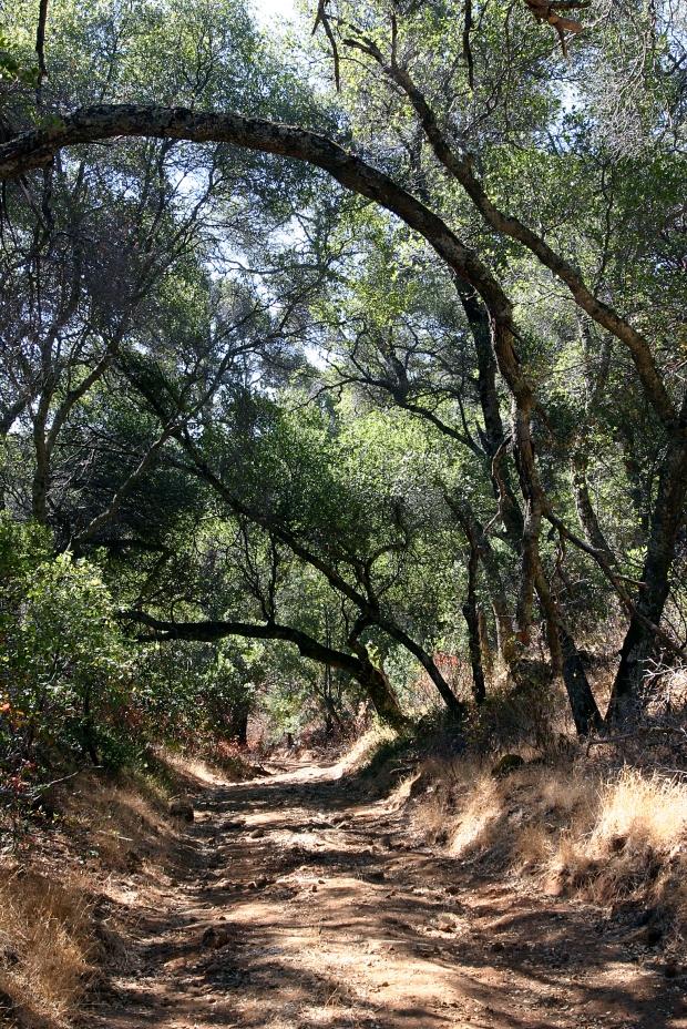 blue oak volvon loop10