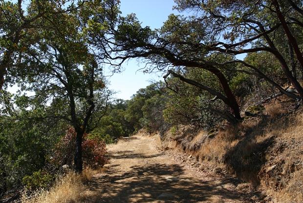 blue oak volvon loop11