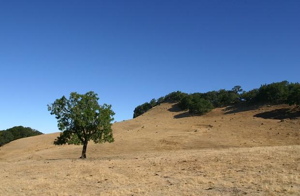 blue oak volvon loop19