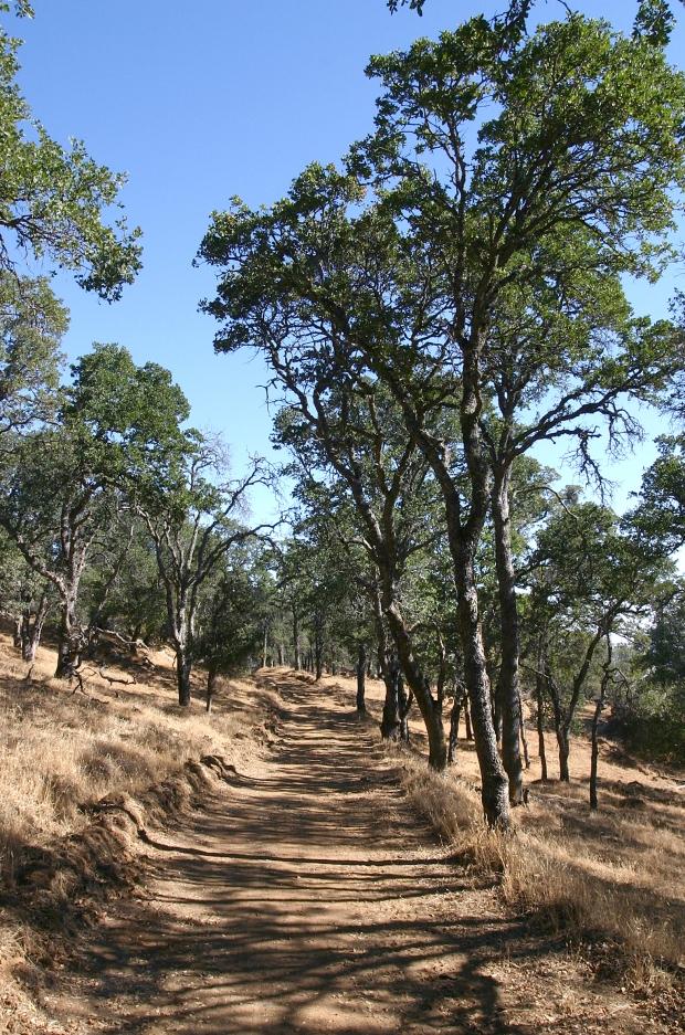 blue oak volvon loop22