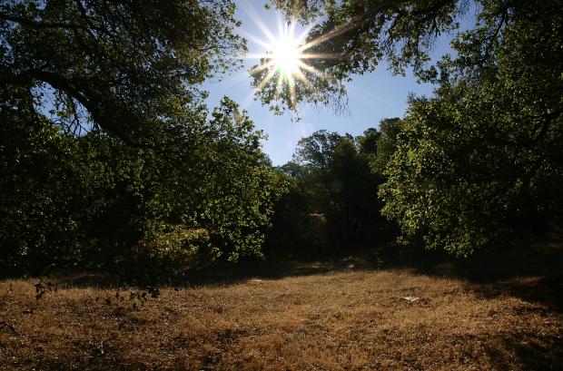 blue oak volvon loop5