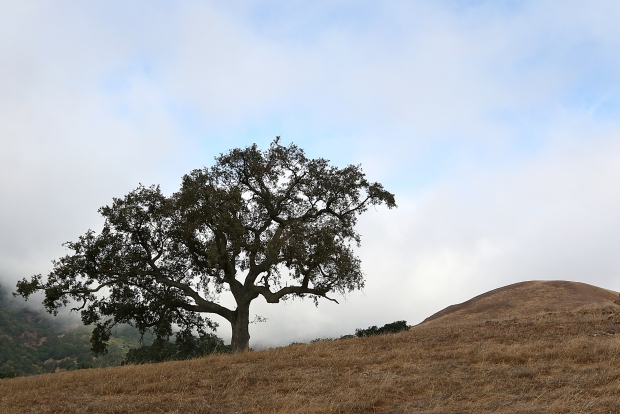 pleasanton ridge loop hike35