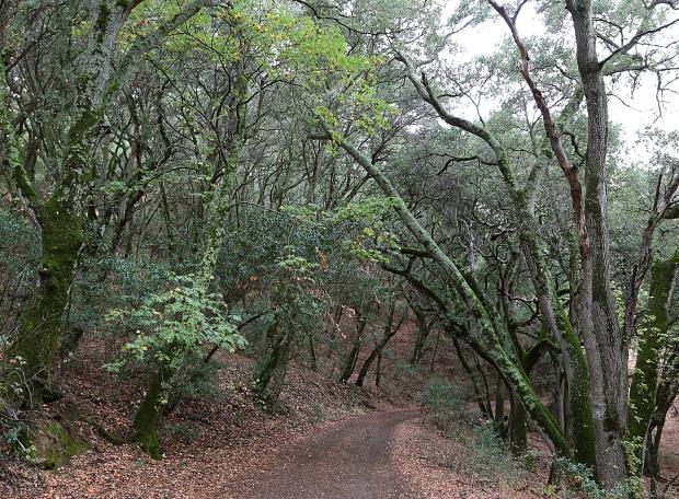 sulphur springs:black hills loop16
