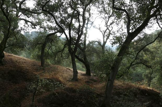 sulphur springs:black hills loop24