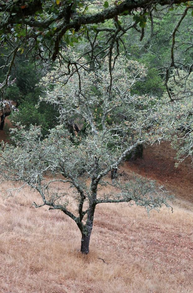 sulphur springs:black hills loop26