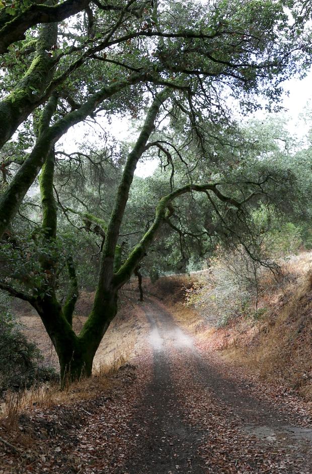 sulphur springs:black hills loop27