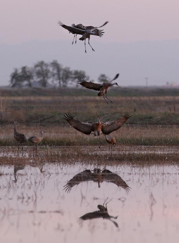 Isenberg sunset crane arrival1