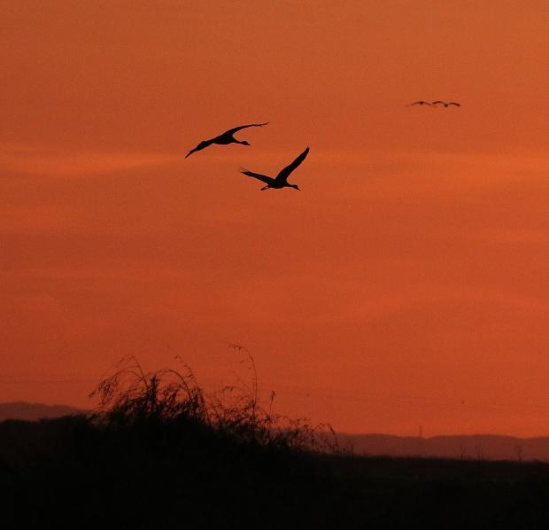Isenberg sunset crane arrival10