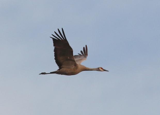 Isenberg sunset crane arrival11