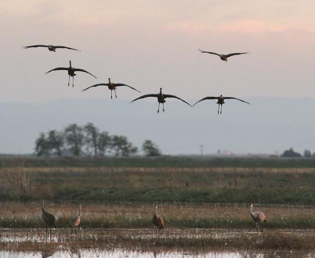Isenberg sunset crane arrival12