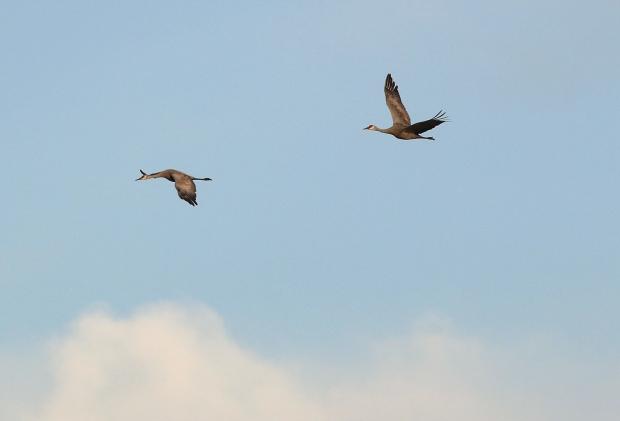 Isenberg sunset crane arrival13