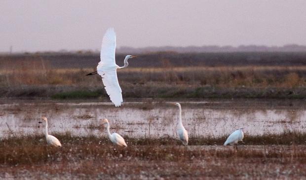 Isenberg sunset crane arrival15