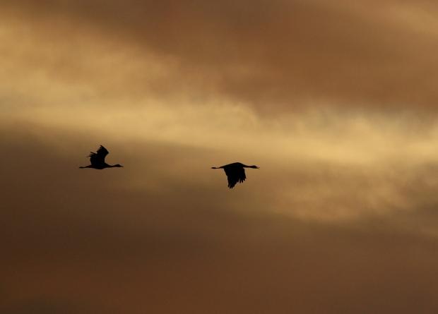 Isenberg sunset crane arrival16