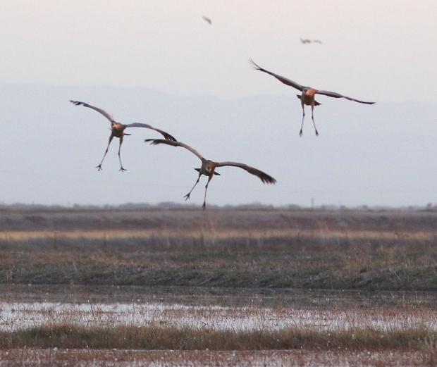 Isenberg sunset crane arrival19