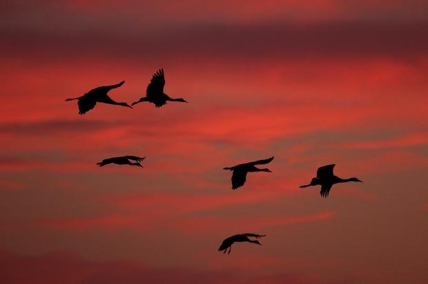 Isenberg sunset crane arrival2