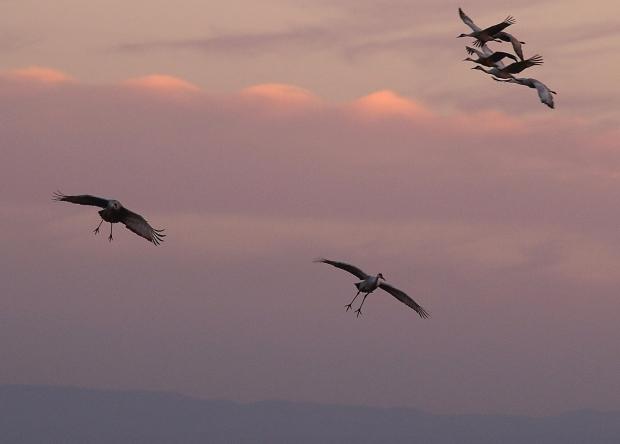 Isenberg sunset crane arrival20
