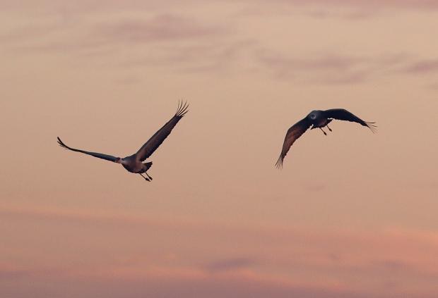 Isenberg sunset crane arrival21