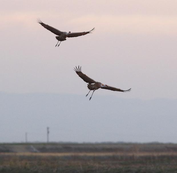 Isenberg sunset crane arrival22