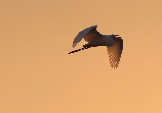 Isenberg sunset crane arrival23