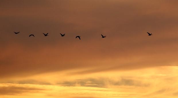 Isenberg sunset crane arrival24