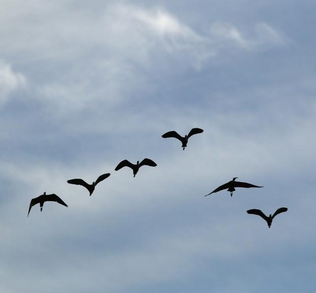 Isenberg sunset crane arrival25