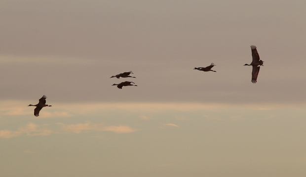 Isenberg sunset crane arrival26