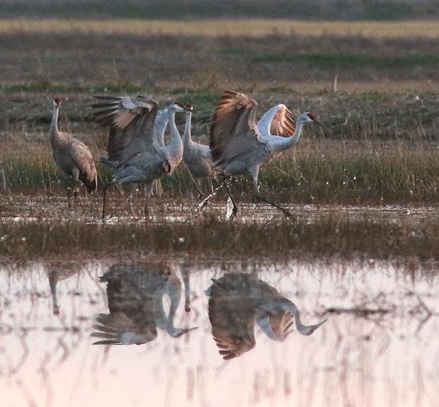 Isenberg sunset crane arrival28