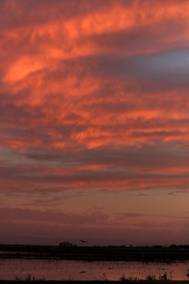 Isenberg sunset crane arrival30