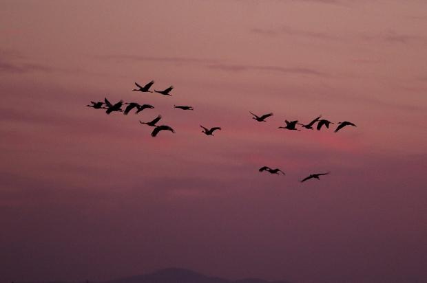 Isenberg sunset crane arrival32