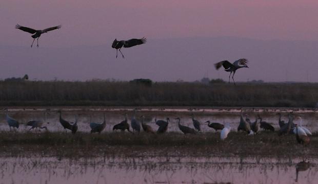 Isenberg sunset crane arrival33