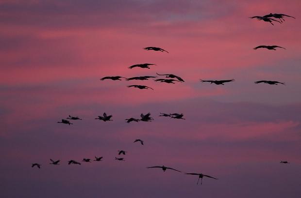 Isenberg sunset crane arrival35