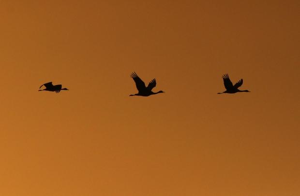 Isenberg sunset crane arrival5