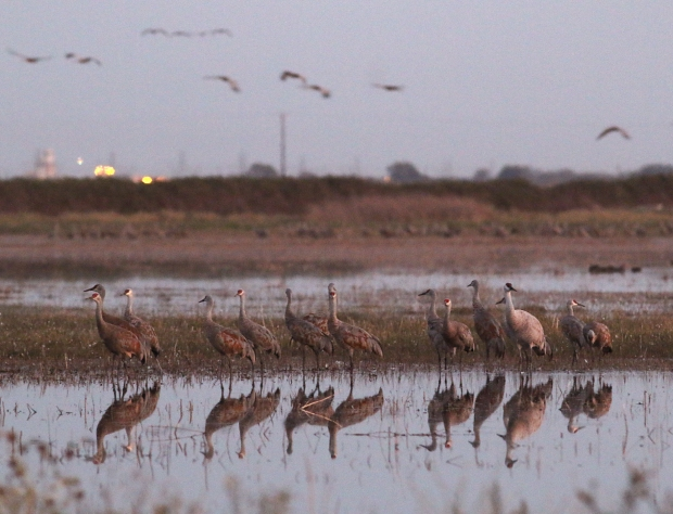 Isenberg sunset crane arrival6
