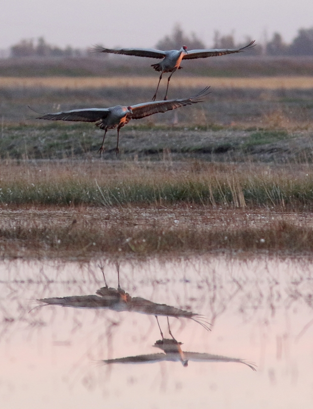 Isenberg sunset crane arrival7