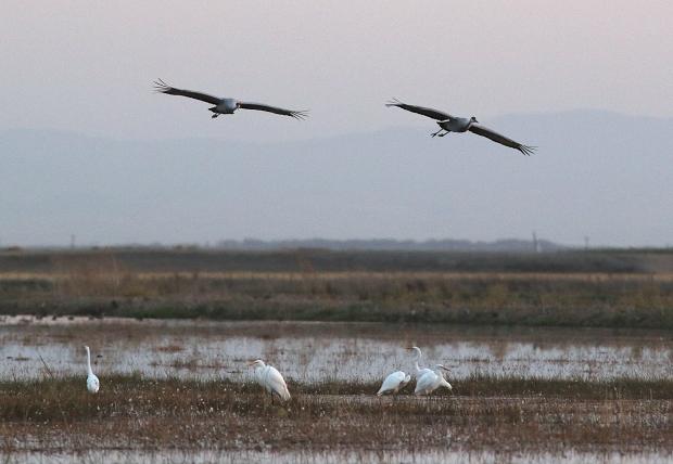 Isenberg sunset crane arrival8