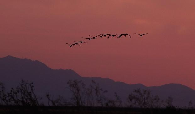 Isenberg sunset crane arrival9
