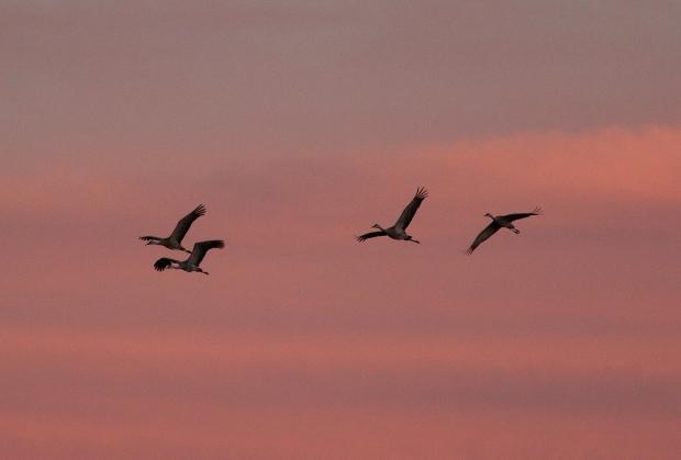 Isenberg Sunset Arrival13
