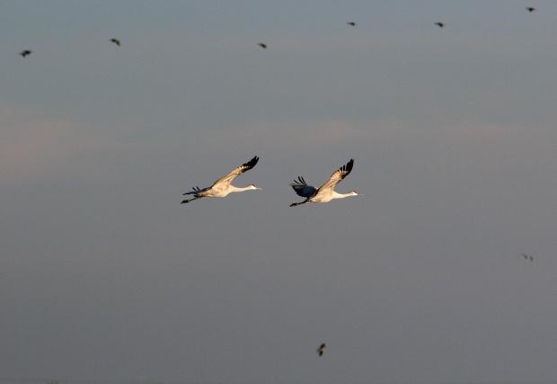 Isenberg Sunset Arrival18