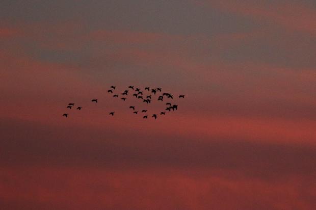 Isenberg Sunset Arrival22