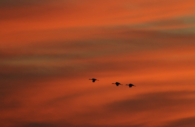Isenberg Sunset Arrival24