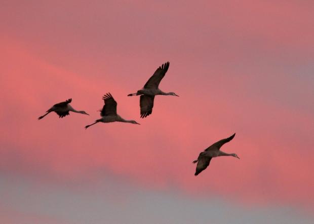 Isenberg Sunset Arrival25