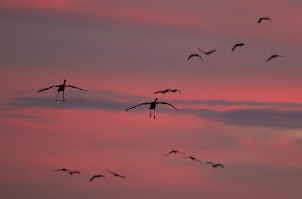 Isenberg Sunset Arrival28