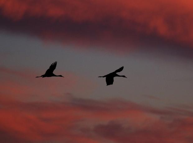 Isenberg Sunset Arrival3