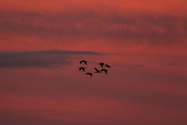Isenberg Sunset Arrival36