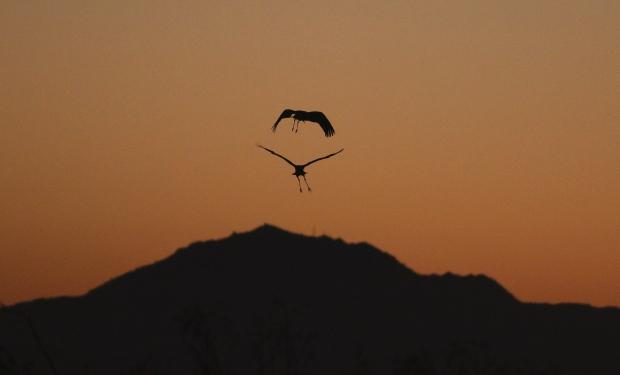 Isenberg Sunset Arrival37